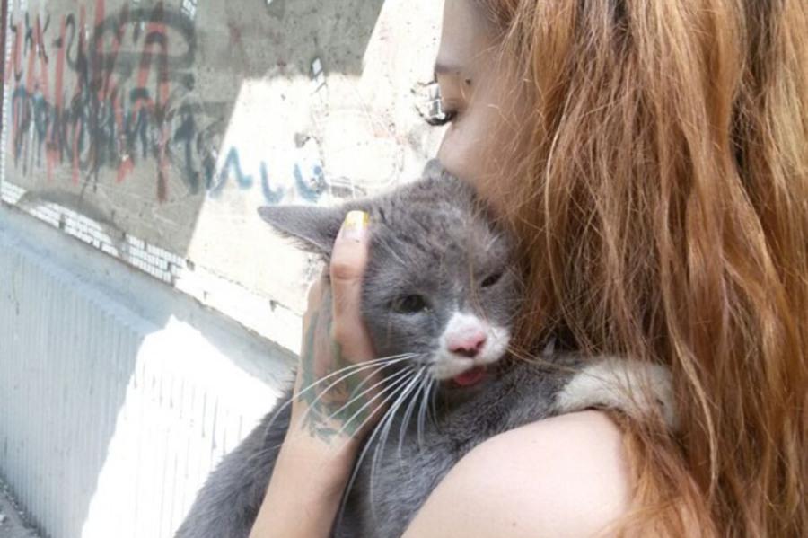Спасители кота