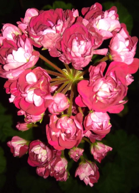 Тату роза значение и цвет