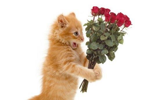Открытки животные и цветы