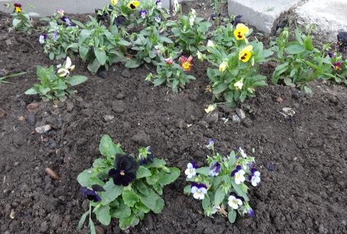 Во саду ли в огороде форум